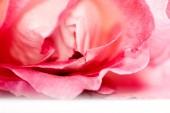 Barevné, krásnými, jemnými okvětními lístky růží