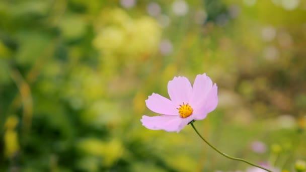 Krásné zahradní květiny za slunečného letního dne