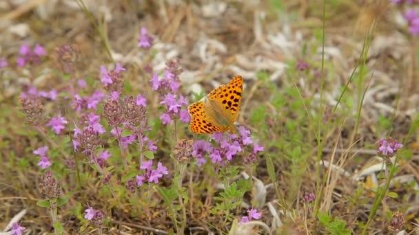 Motýl na lučních květin v poli