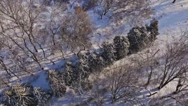 Ez a légi felvétel a sűrű fenyő erdő egy hideg téli napon.