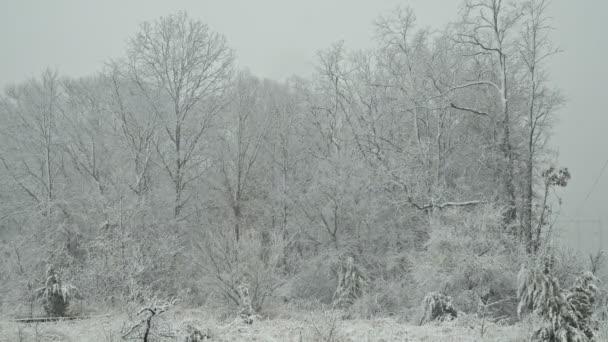 Erős hó téli idő hóesés esik a téli táj. vihar téli időjárás havazás