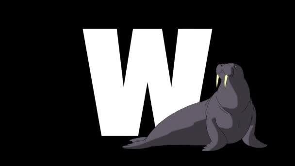 Animované zoologické anglické abecedy. Alfa matný pohyb grafiky. Kreslená MRUs v popředí písmene W