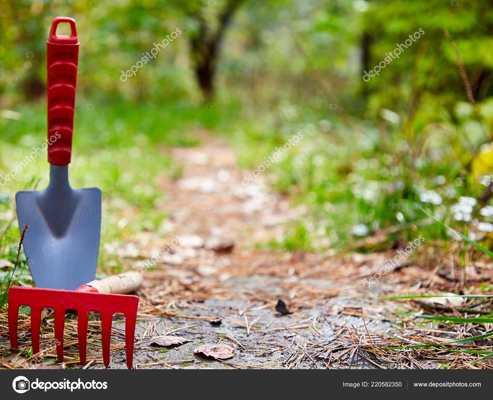 Fond, jardin, nettoyage, petite pelle, râteau, sur la gauche ...