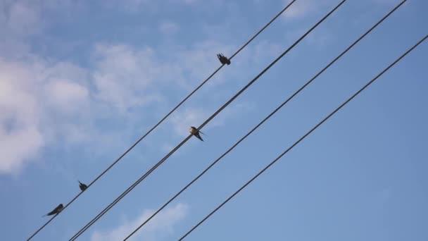 Spatzen sitzen auf Stromkabeln. blauer Himmel mit Wolken