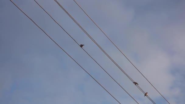 Spatzen sitzen auf Stromkabeln