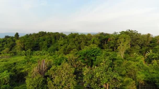 4 k Drone zastřelených letecký pohled na malebná krajina příroda tropických lesů
