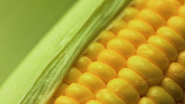 4 kapky vody k na čerstvé zralé vyloupané kukuřice vysoké vitamin potraviny z přírody