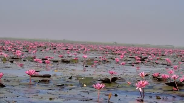 Loď pohled kvetoucí přírody růžový leknín velký rybník