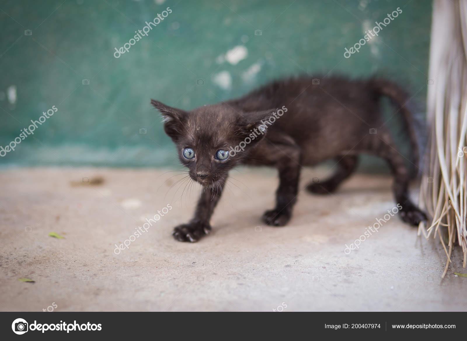 vecchio magro nero micio