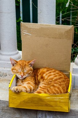 Photo ginger cat sitting in box on street.