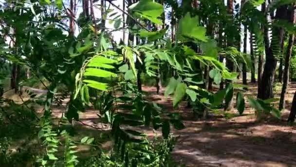 Uzavřete krásné zelené listí na stromech slunce svítí čerstvosti letní textura příroda lesní prostředí jasné sluneční světlo sezóna světlo přírodní paprsky větev