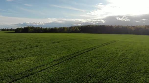 Letecký pohled na zelené pole zemědělství