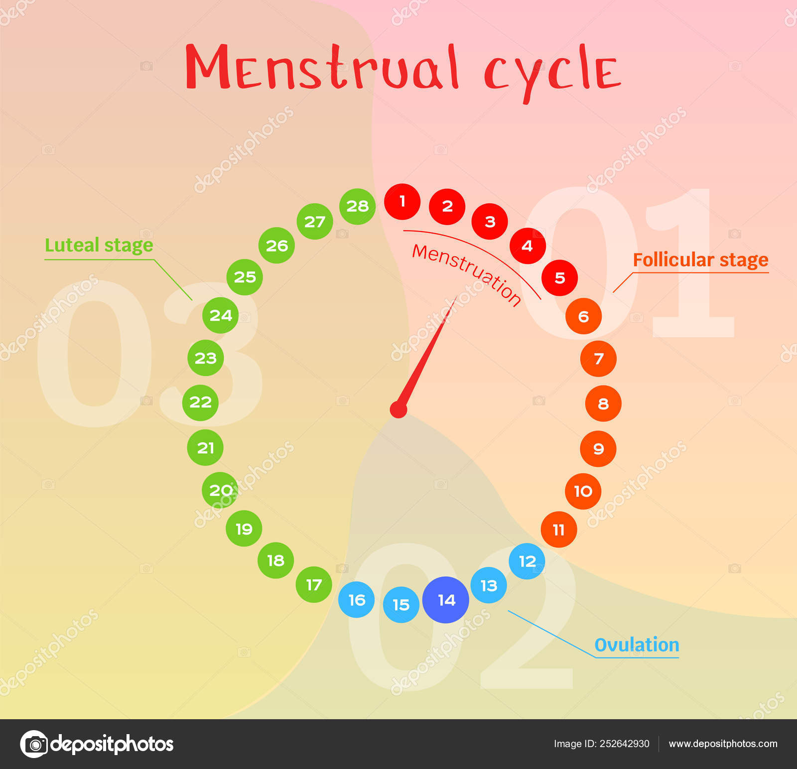 Calendario de ovulacao feminina