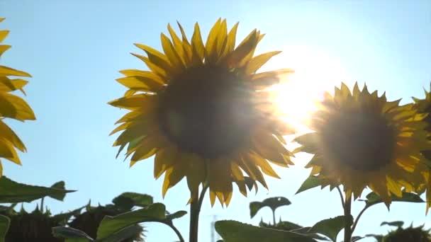 Bergerak Matahari Stok Video Bergerak Matahari Rekaman Bebas Royalti Halaman 2 Depositphotos