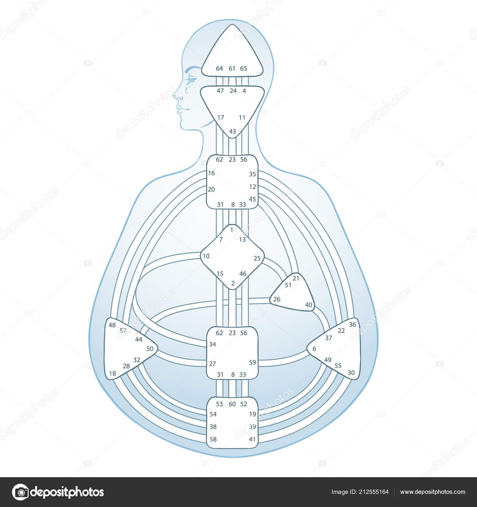 Human Design Bodygraph Chart Design Vector Isolated Illustration Energy Centers Stock Vector C Vgorbash 212555164