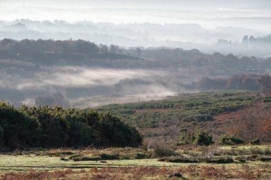 Misty morning in the Ashdown Forest