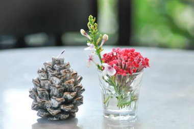 Pine flower candle,Christmas candle on Christmas day