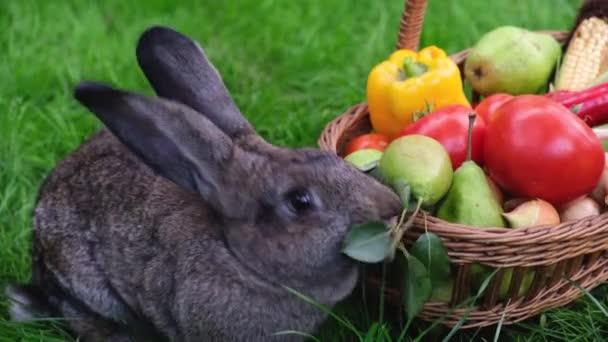 Egy háziasított szürke nyúl salátalevelet eszik friss gyümölcsökkel és zöldségekkel a zöld fű hátterében..