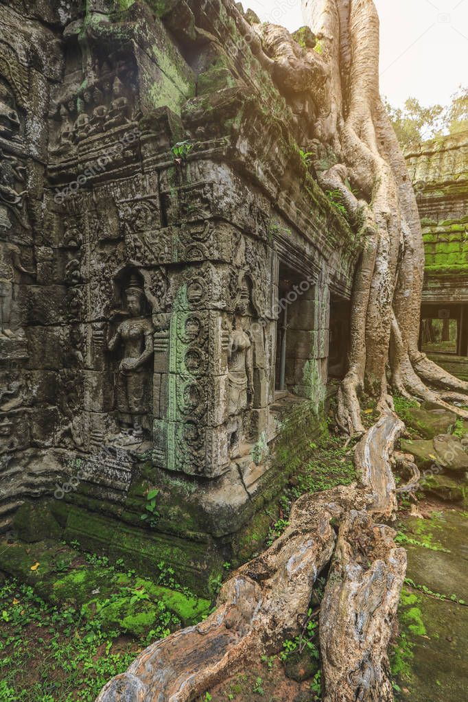 Tree roots growing over Ta Prohm Khmer temple, Siem Reap, Cambodia