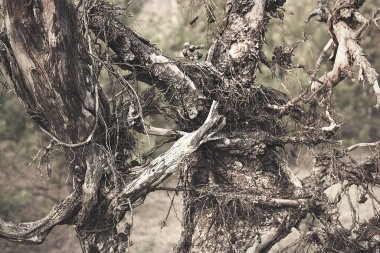 Dark spooky occult pagan witchcraft ritual legend forest roots branches texture. Photo wallpaper background in retro vintage faded processing.
