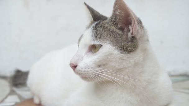 Krásná mladá kočka je velký plán. Zpomal. Vysoce kvalitní FullHD záběry
