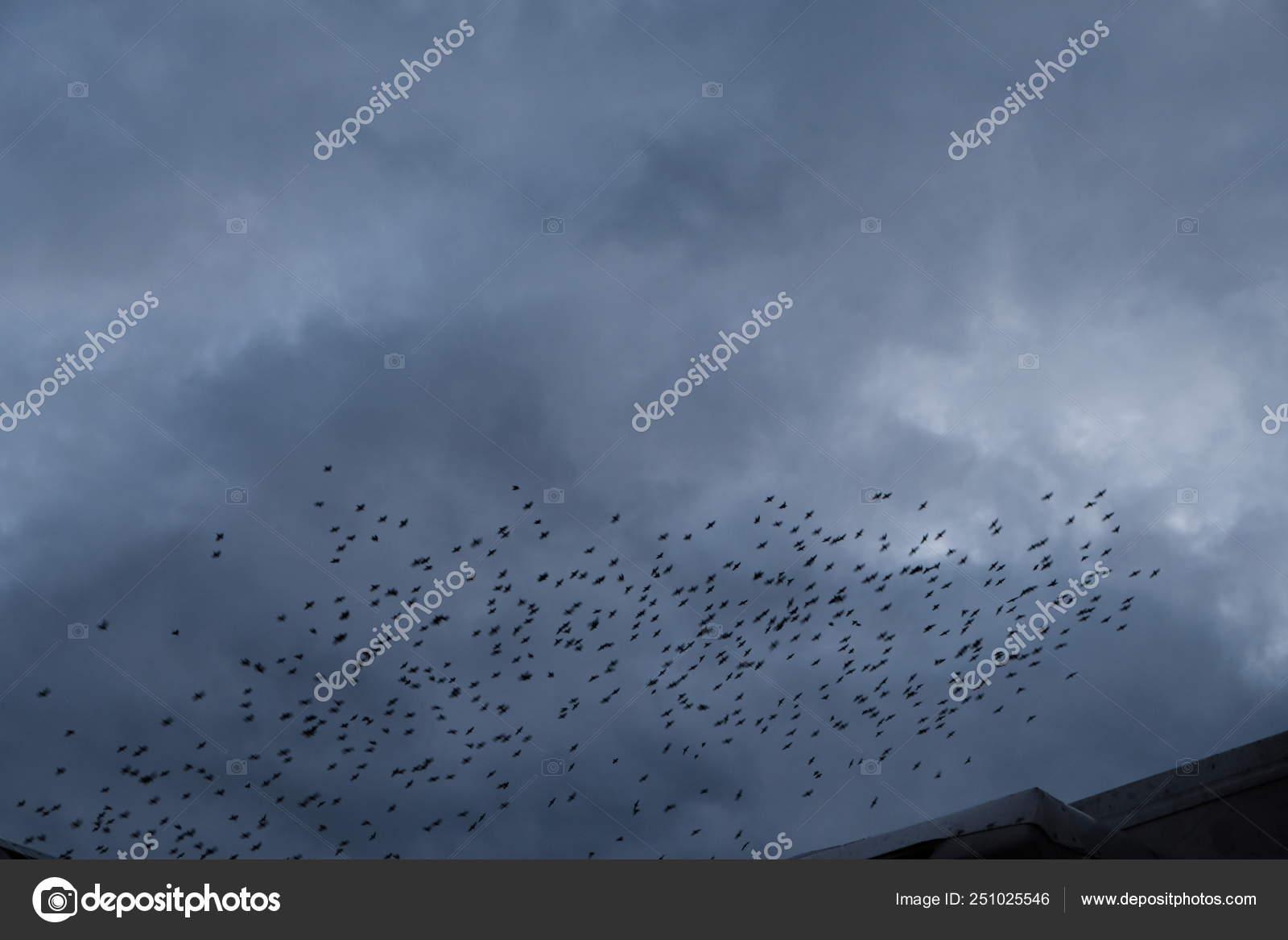 Skovrcy Vechrom Birds Fly At Night In The Birdhouses Nest Stock