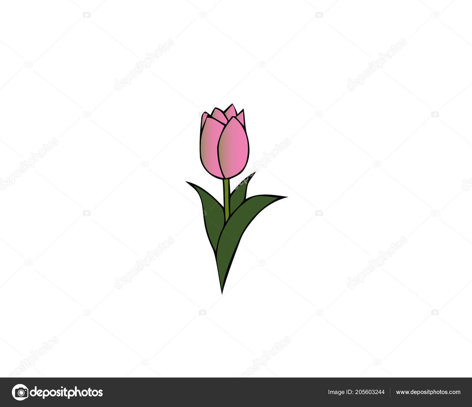 Unduh 400 Background Vector Bunga Tulip HD Terbaik