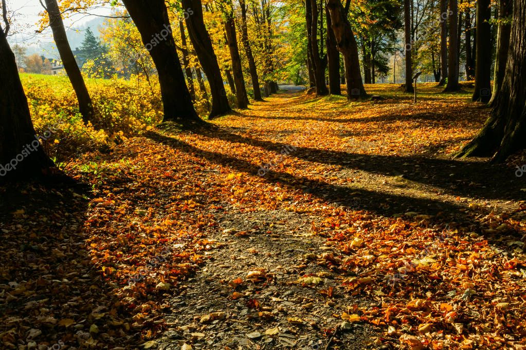 Gold autumn scenery in a forest with the sun casting beautiful rays of light through the foliage unto a footpath