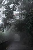 path in the dark autumn park