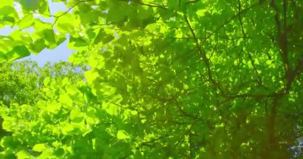 Tavaszi benyomások - szép lombozat, egy napsütéses napon - Prores