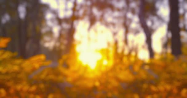 Podzimní dojmy-záměrně zcela zaostřený videozáznam ukazující na podzimní scenérii při západu slunce-nepřerušuje se