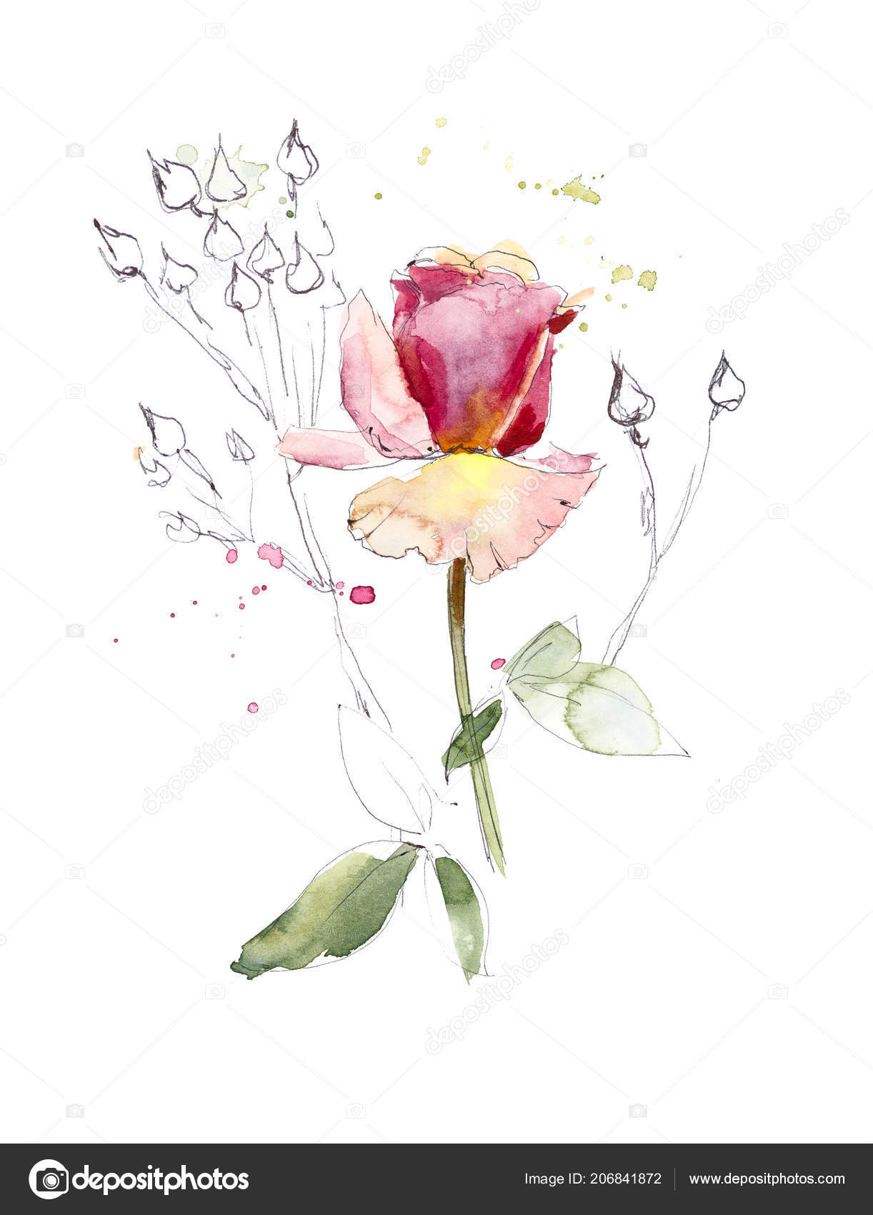 Motif Rose Rose Dessins Mariage Peinture Aquarelle Cartes Voeux