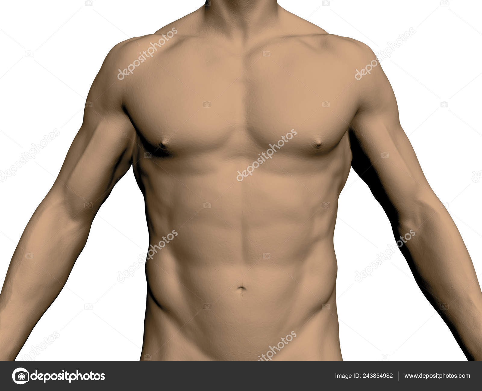 Nude Male Torso Front View Head Legs Realistic Human Body