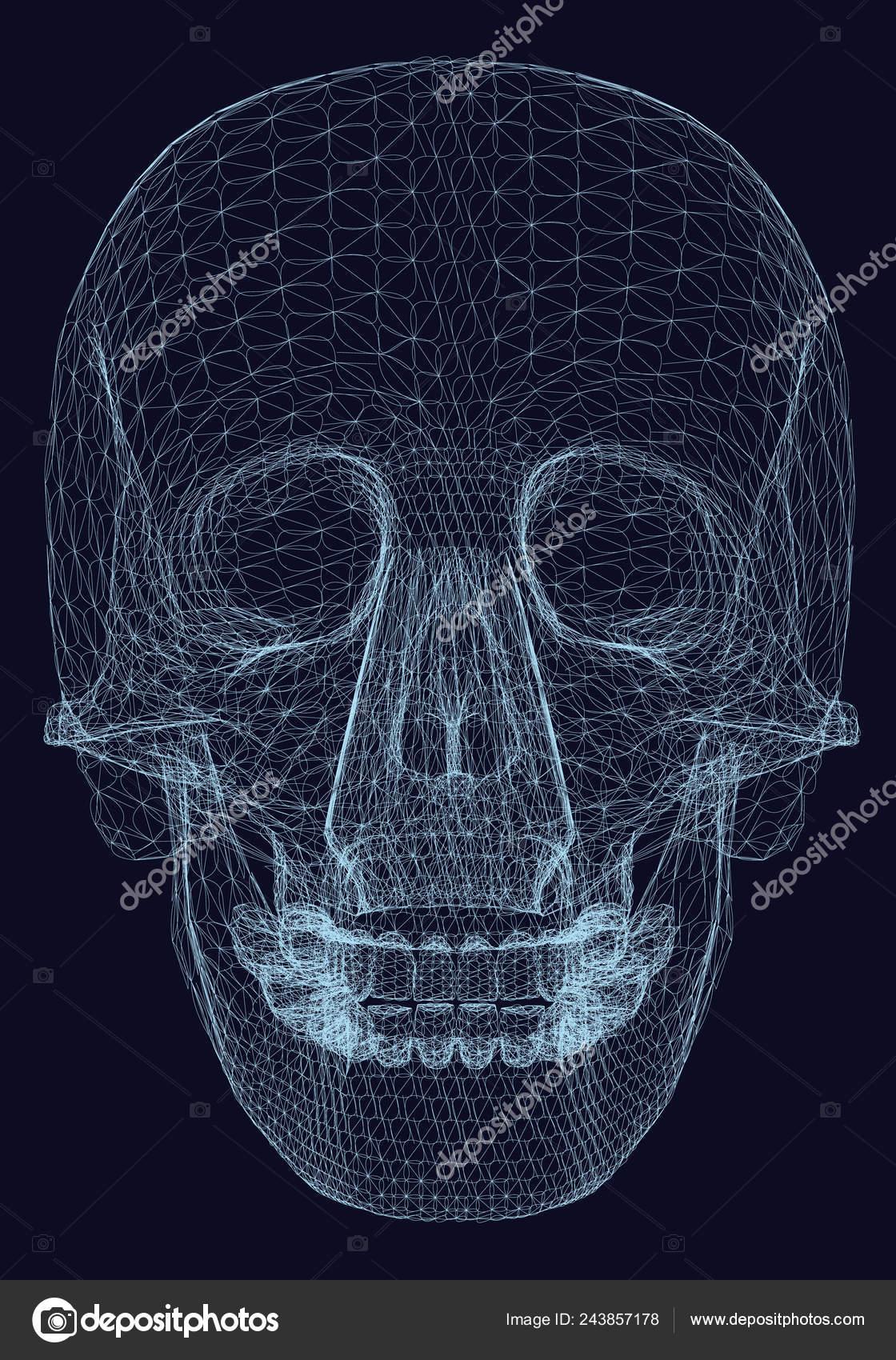 Estructura Metálica Cráneo Humano Decorativo Sobre Fondo