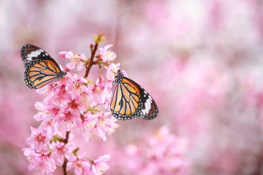 "Картина, постер, плакат, фотообои ""butterfly on cherry blossom flower"", артикул 382914102"