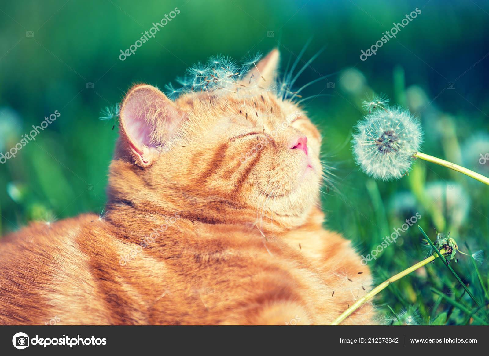 Portrait Uber Ein Kleines Katzchen Garten Katze Geniessen Fruhling