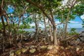 Malebný pohled populární Florida Keys podél bayside s mangrovníky