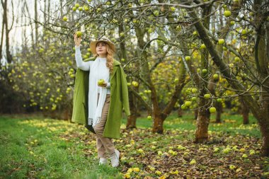 Beautiful asian woman picking a green apple in apple orchard.