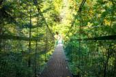 Most na turistické trase ve Slovenském ráji