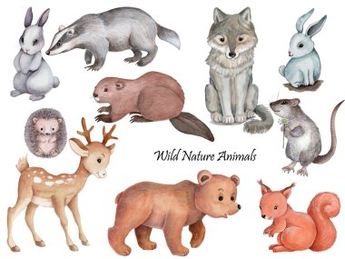 Set collection clipart of cute cartoon animals, wild nature woodland forest animals.  Watercolor hand drawn isolated illustrations for childtren. Hand drawn. stock vector