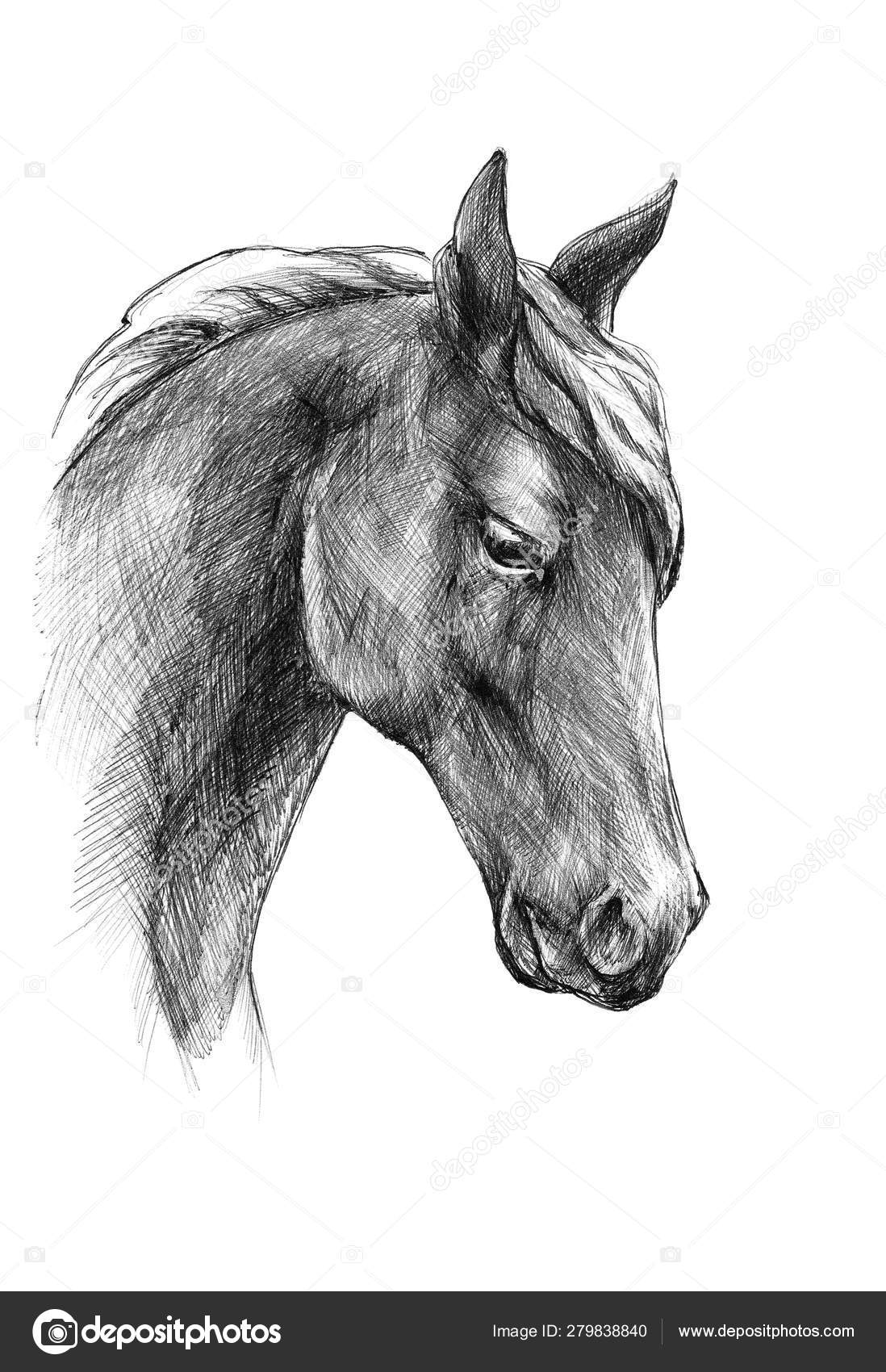 Sketch A Horse Head Black And White Drawing Stock Photo C Vensk 279838840