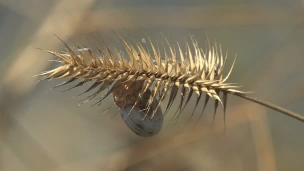 Tengeri kagyló ringatózik a szélben, ősszel egy növénybe kapaszkodik, magvak a mezőn