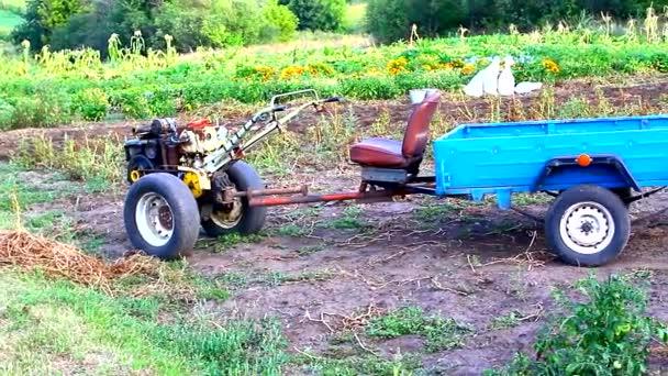 A technológia csodája, egy hátramaradt traktor pótkocsival burgonya exportálásához az ágyból