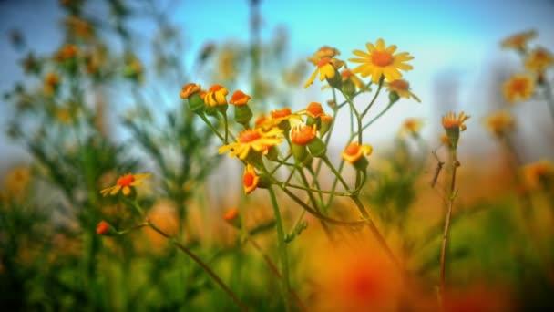 virágok sárga makró réten 4k