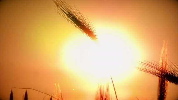 naplemente fű iktatott 4k