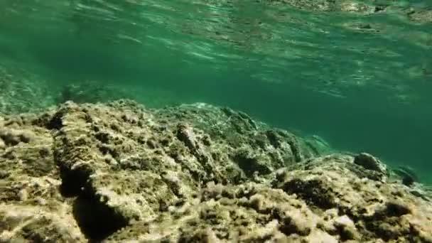 pesce sottacqua immersioni subacquee