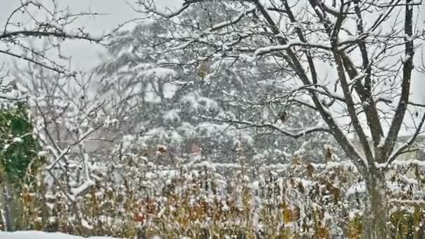 padá sníh na stromech