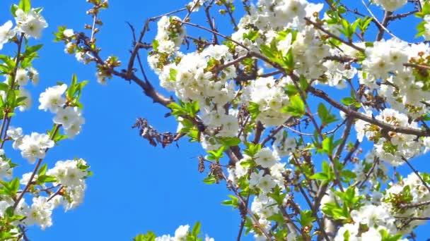 tavaszi virágok fa lassított