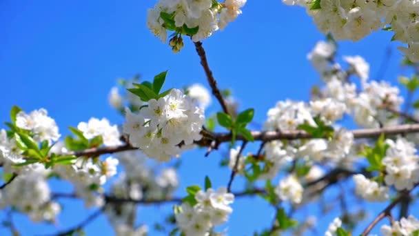jarní květiny na stromě pomalý pohyb