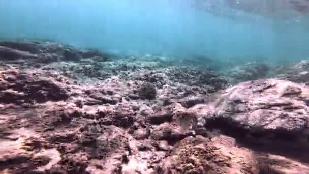 immersioni subacquee pesce 4K